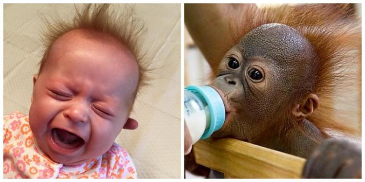 Nora's monkey hair!
